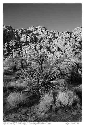 Yuccas and Wonderland of Rocks, Indian Cove. Joshua Tree National Park (black and white)