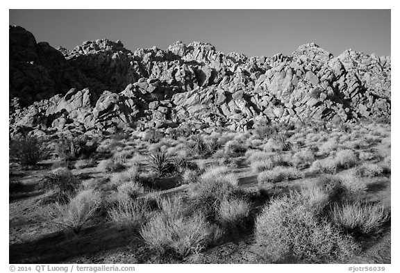 Towering Wonderland of Rocks rising above Indian Cove. Joshua Tree National Park (black and white)