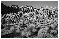 Towering Wonderland of Rocks rising above Indian Cove. Joshua Tree National Park ( black and white)