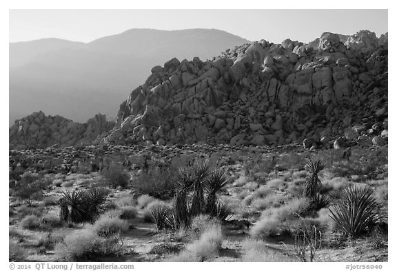 Boulder outcrop and ridge, Indian Cove. Joshua Tree National Park (black and white)