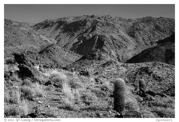 Barrel cacti and craggy hills. Joshua Tree National Park (black and white)