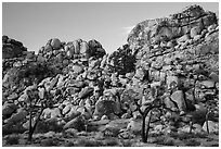 Joshua trees and tall rock outcrops. Joshua Tree National Park ( black and white)