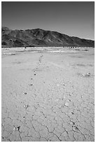 Parallel animal tracks on Pleasant Valley playa. Joshua Tree National Park ( black and white)