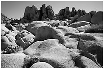 Flowers and boulders near Squaw Tank. Joshua Tree National Park ( black and white)