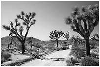 Queen Valley Road. Joshua Tree National Park ( black and white)