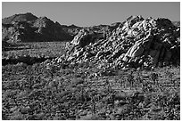 Joshua trees and rock outcrops from above. Joshua Tree National Park ( black and white)