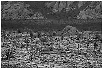 Joshua Trees and cliffs. Joshua Tree National Park ( black and white)