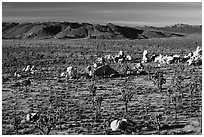 Mojave Desert landscape with Joshua Trees and boulders. Joshua Tree National Park ( black and white)