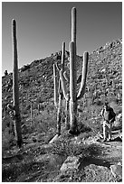 Hiker and saguaro cactus, Hugh Norris Trail. Saguaro National Park ( black and white)