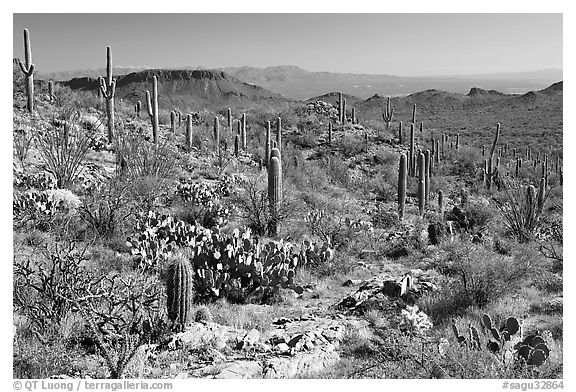 Rocks, flowers and cactus near Ez-Kim-In-Zin. Saguaro National Park (black and white)