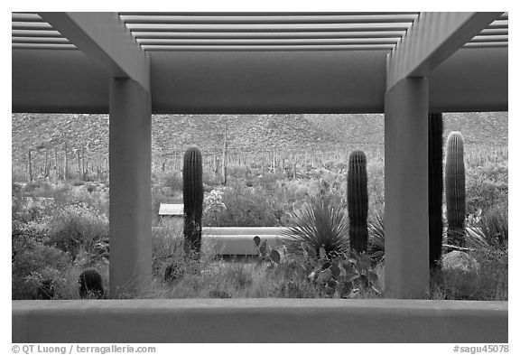 Red Hills Visitor Center. Saguaro National Park (black and white)