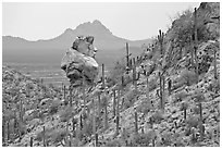 Cactus slope and balanced rock. Saguaro National Park ( black and white)