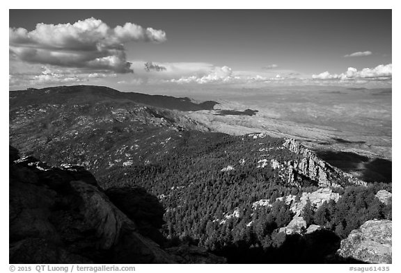 Northeast view over forest and desert from Rincon Peak. Saguaro National Park (black and white)
