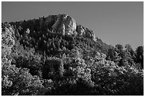 Rincon Peak rising above pine forests. Saguaro National Park ( black and white)