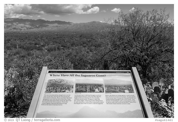Where have all the saguaro gone interpretive sign. Saguaro National Park (black and white)