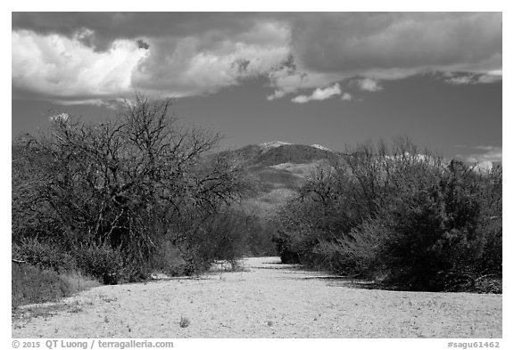 Dry wash, Rincon Mountain District. Saguaro National Park (black and white)