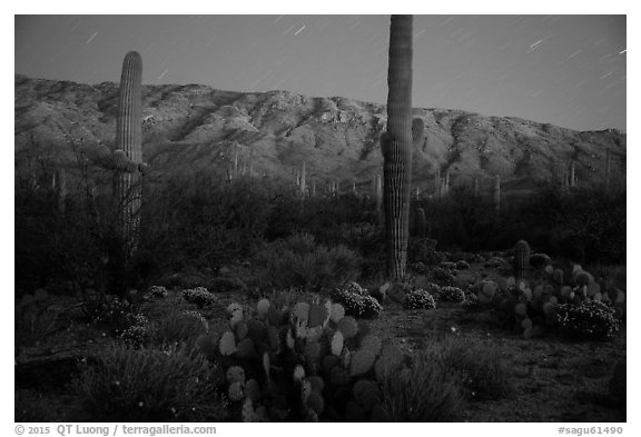 Cactus, Rincon Mountains, and star trails at night. Saguaro National Park (black and white)