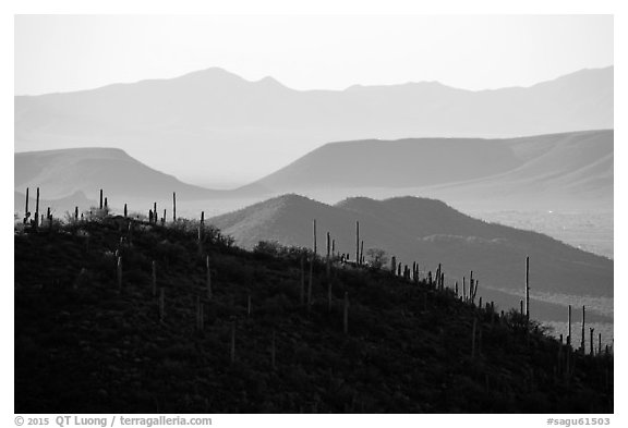 Cactus and distant desert mountain ridges. Saguaro National Park (black and white)
