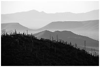Cactus and distant desert mountain ridges. Saguaro National Park ( black and white)