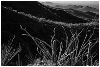 Ocotillo and mountain ridges. Saguaro National Park ( black and white)