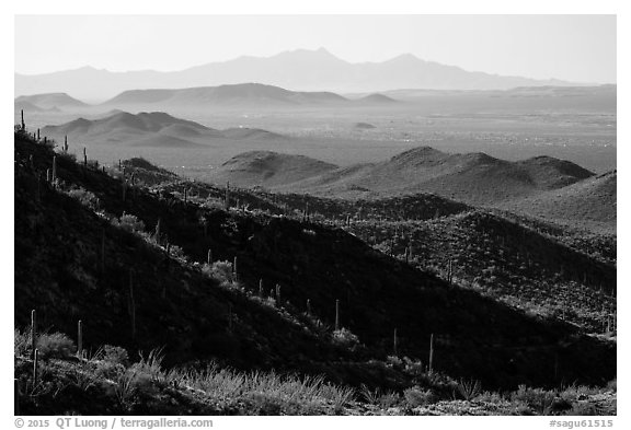 Desert mountains with saguaro-covered ridges. Saguaro National Park (black and white)