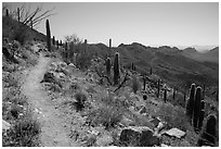 Hugh Norris Trail. Saguaro National Park ( black and white)