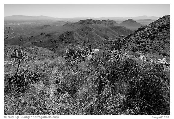 Wildflowers and Tucson Mountains from Wasson Peak. Saguaro National Park (black and white)