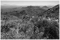 Wildflowers and Tucson Mountains from Wasson Peak. Saguaro National Park ( black and white)
