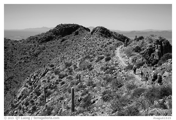 Hikers on trail below Wasson Peak. Saguaro National Park (black and white)