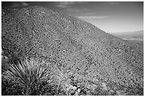Wasson Peak. Saguaro National Park ( black and white)