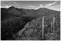 Wash, cactus, and Wasson Peak. Saguaro National Park ( black and white)