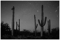 Saguaro cacti and starry night sky. Saguaro National Park ( black and white)