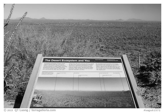 Desert Ecosystem interpretive sign. Saguaro National Park (black and white)