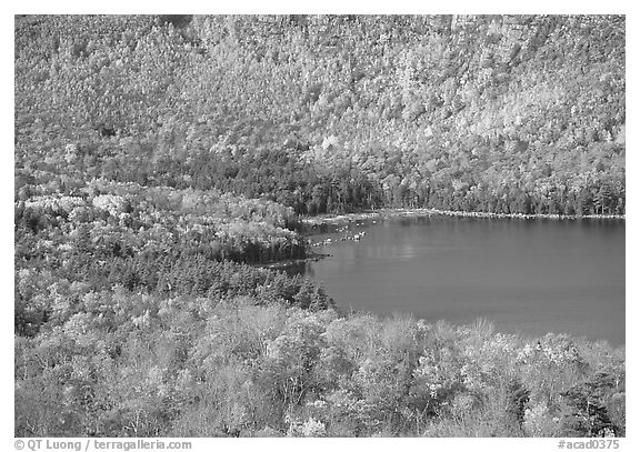 Eagle Lake, surrounded by slopes in fall foliage. Acadia National Park (black and white)