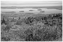 Shrubs and Frenchman Bay from Cadillac mountain. Acadia National Park, Maine, USA. (black and white)