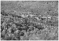 Valley filled  with trees in autumn foliage. Acadia National Park, Maine, USA. (black and white)