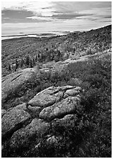 Berry plants in bright fall color, rock slabs, forest on hillside, and coast. Acadia National Park, Maine, USA. (black and white)