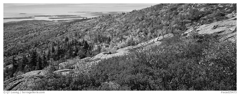 Autumn landscape with brightly colors shrubs and trees. Acadia National Park (black and white)