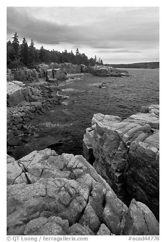 Rocky coastline near Thunder Hole. Acadia National Park (black and white)