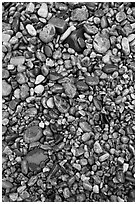Pebbles of various sizes and colors. Acadia National Park, Maine, USA. (black and white)