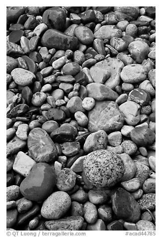 Close-up of multicolored pebbles. Acadia National Park (black and white)