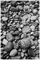 Close-up of multicolored pebbles. Acadia National Park, Maine, USA. (black and white)
