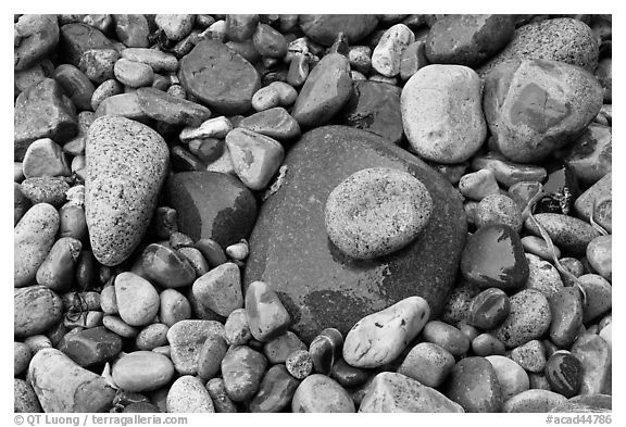 Colorful pebbles shining in the rain. Acadia National Park (black and white)