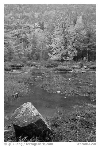 Pond in the rain with trees in fall foliage. Acadia National Park (black and white)