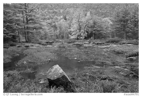 Pond in rainy weather and trees in autumn foliage. Acadia National Park (black and white)