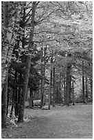 Trail marker signs in the fall. Acadia National Park ( black and white)