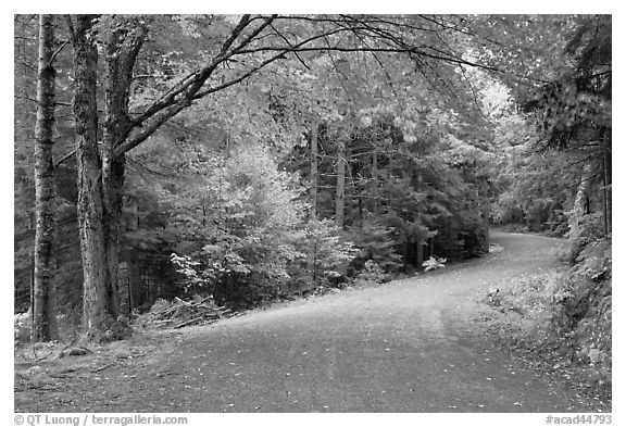 Carriage road. Acadia National Park (black and white)