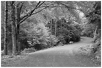 Carriage road. Acadia National Park, Maine, USA. (black and white)