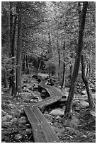 Boardwalk in forest. Acadia National Park, Maine, USA. (black and white)