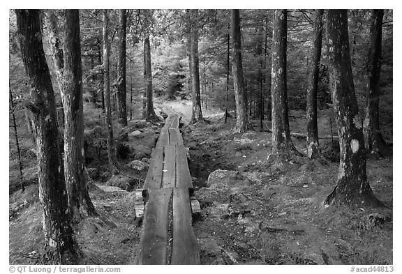Boardwalk in wet forest environment. Acadia National Park (black and white)